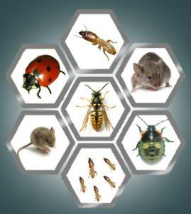 Pest Control Singapore, Pest Control Services, Pest Management